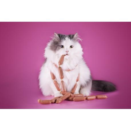 Solutions à l'obésité du chat – catapart.fr